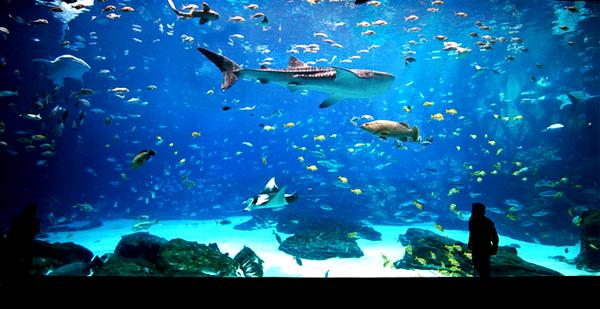 atl_aquarium